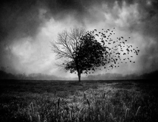 1-Sebastien Del Grosso-Illusion d'un printemps perdu-Flikr