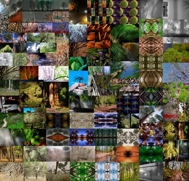 Arboreo 100-collage